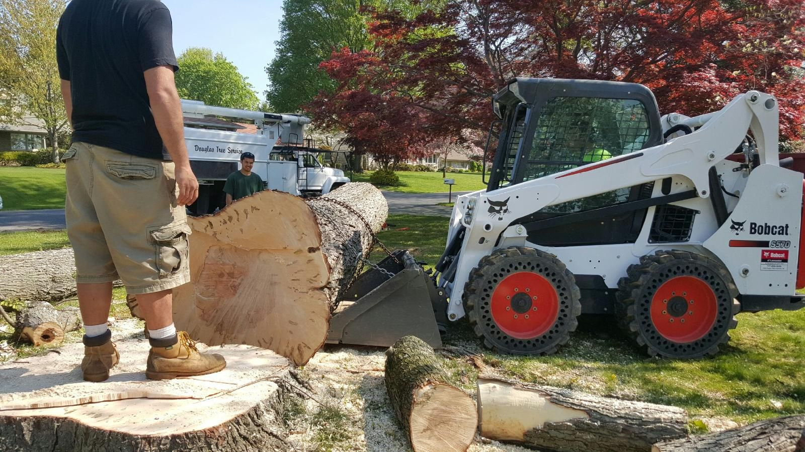 The Service to Expect From a Professional Tree Service Company