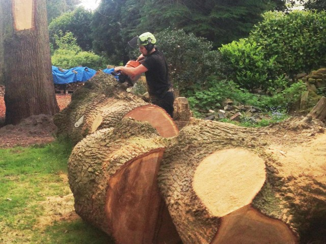 Tree-Services-Cheshire